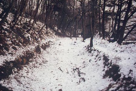 玉川上水旧堀跡